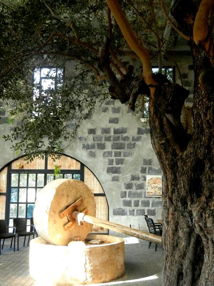 בית הבד של הגולן במבנה בסגנון ימי הביניים
