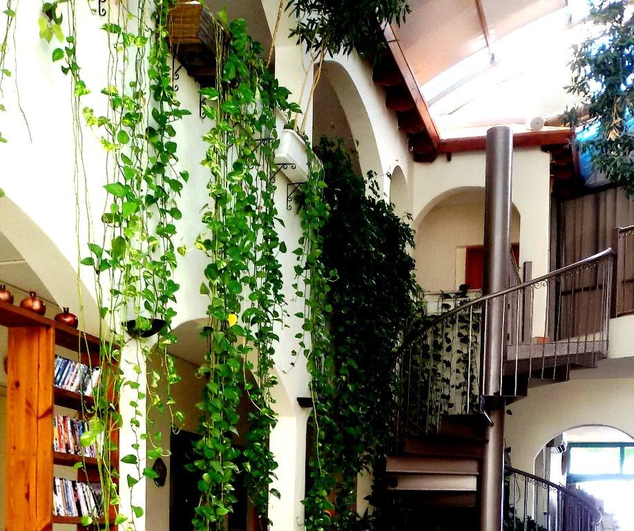 הלובי במלון אמירי הגליל. צמחים ושרכים ויש גם עץ זית במרכז