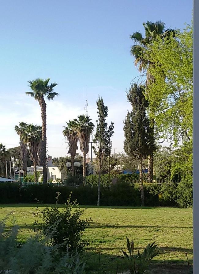 החצר הירוקה במלון אירוס המדבר. צילום נ. גולן