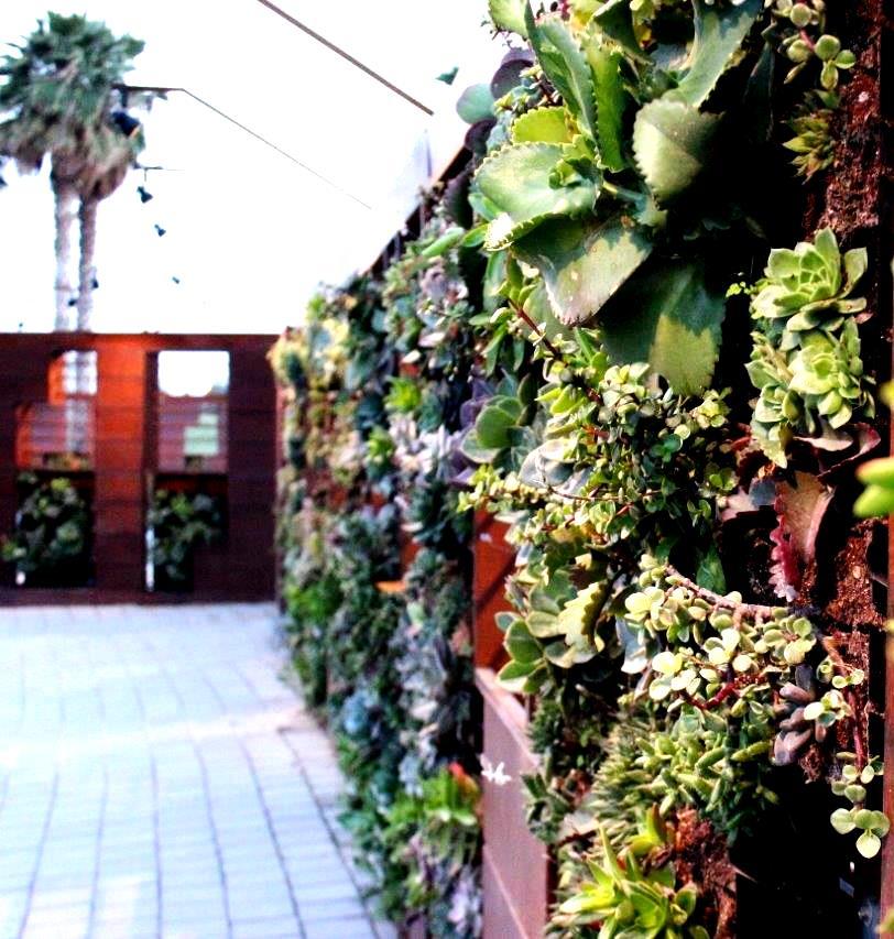 """קיר צמחים. """"קדם"""""""
