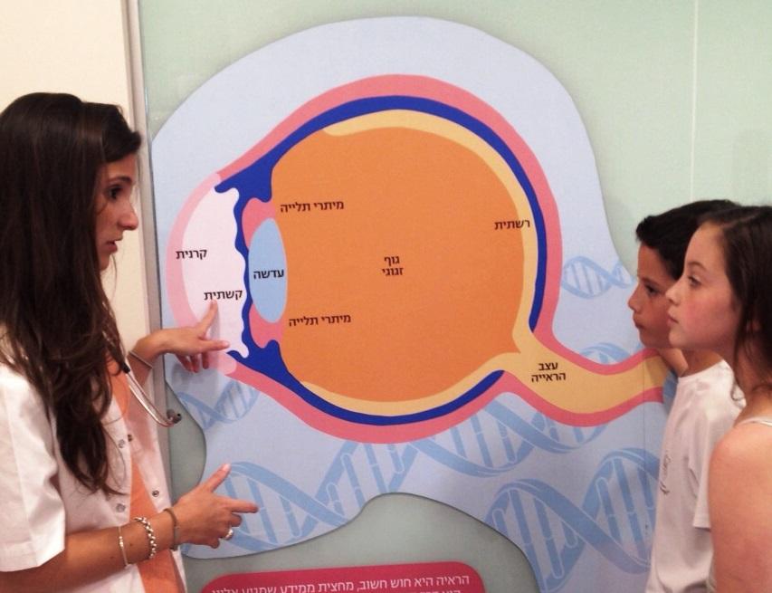 לימוד מבנה העין בקייטנת רפואה