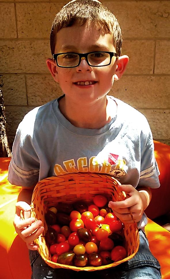 עגבניות בכל צבעי הקשת. צילומים נ. גולן