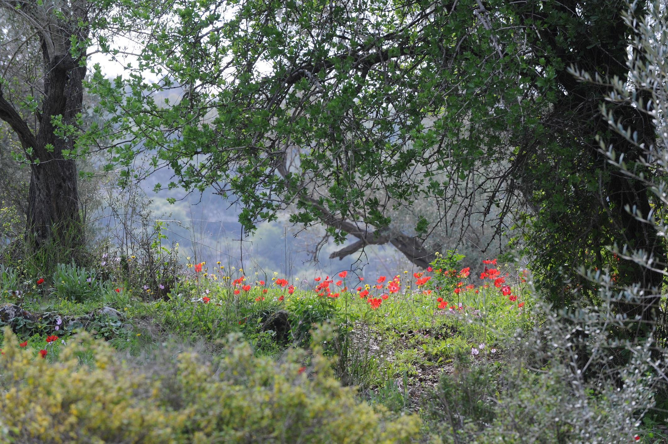 יער נווה צוף. צילום שחר כהן תיירות בנימין